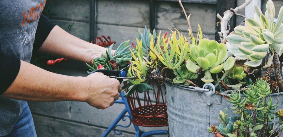easy diy gift plants