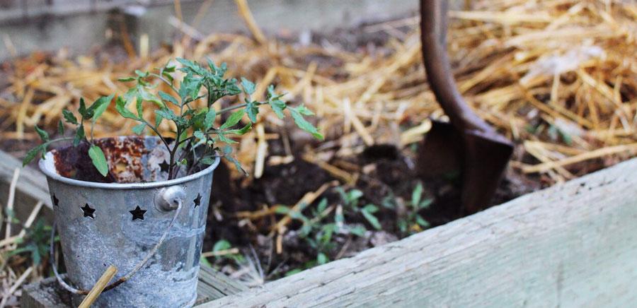 planting seeds plant shovel